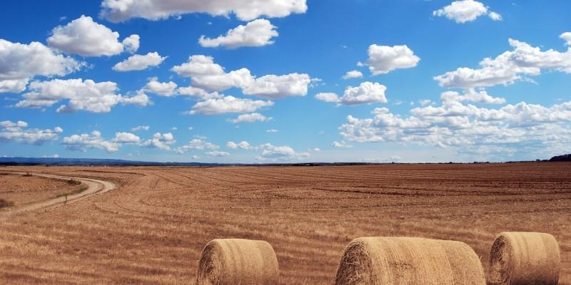 Działka rolna Konin - kupno