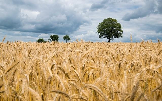 Nowe zasady obrotu nieruchomościami rolnymi.